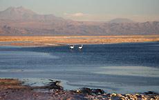 Laguna Chaxa, Chile