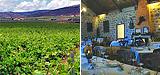 Rutas enol�gicas en Castilla La Mancha