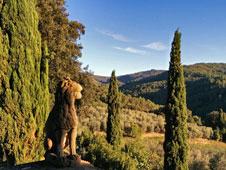 Una escapada a la Toscana requiere coche de alquiler, GPS y ninguna prisa.