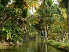 Los 'backwaters' son un ecosistema de aguas salobres �nico en el mundo. Foto: Shutterstock.